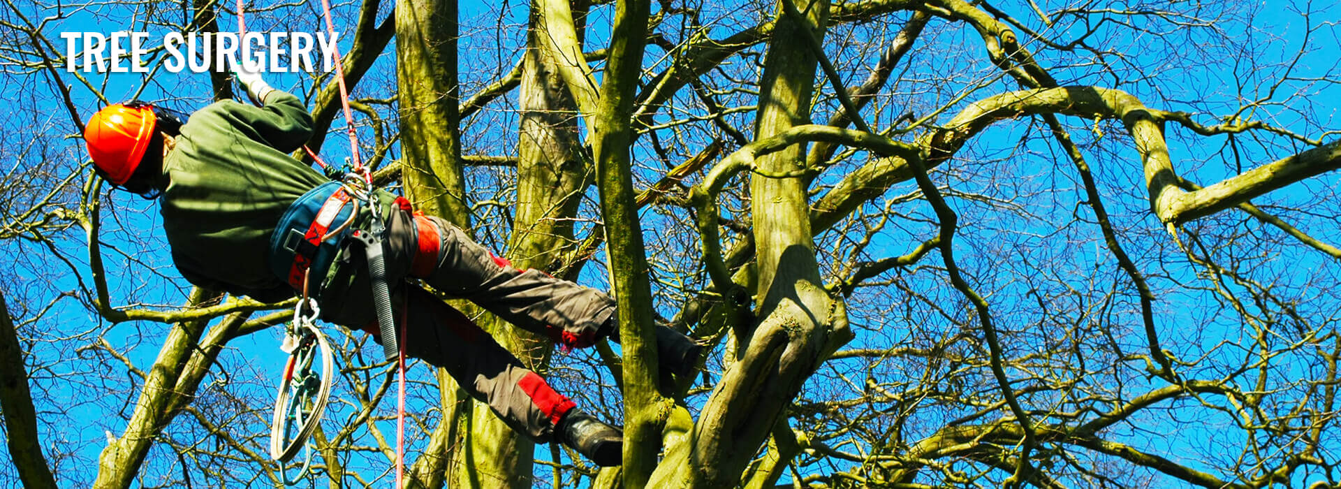 tree surgery ruxley landscapes bexley bromley kent